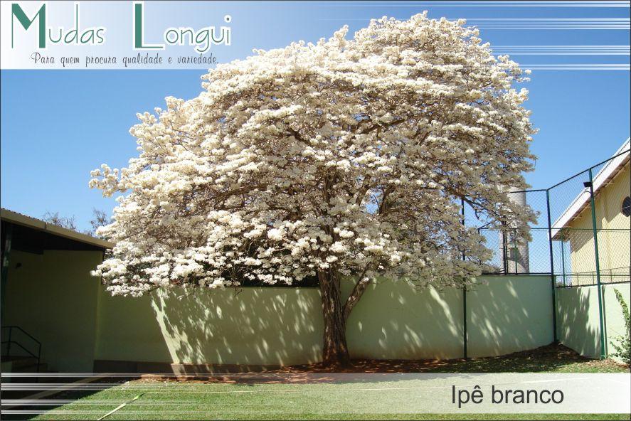 ipe de jardim botânico:Jardim Related Keywords & Suggestions – Jardim Long Tail Keywords